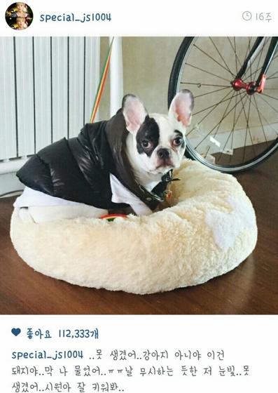 シウォン スジュ 犬